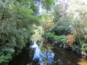 Stream at the Mount Usher Gardens